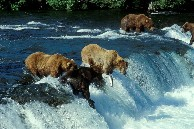 Brooks Fall - Katmai Nationalpark